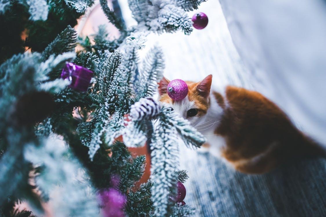Wat als je kat gek is op de kerstboom