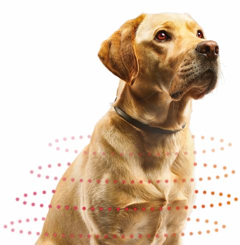 Beaphar Canishield beschermt je hond langdurig