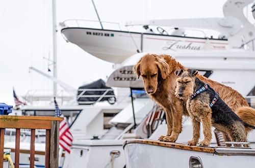 chien prend le bateau