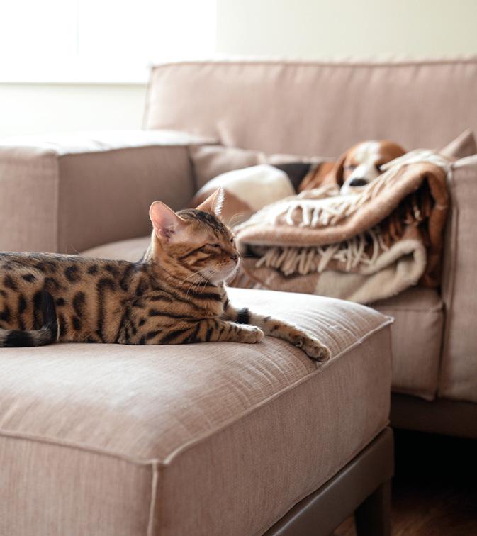cat and dog sleeping on sofa
