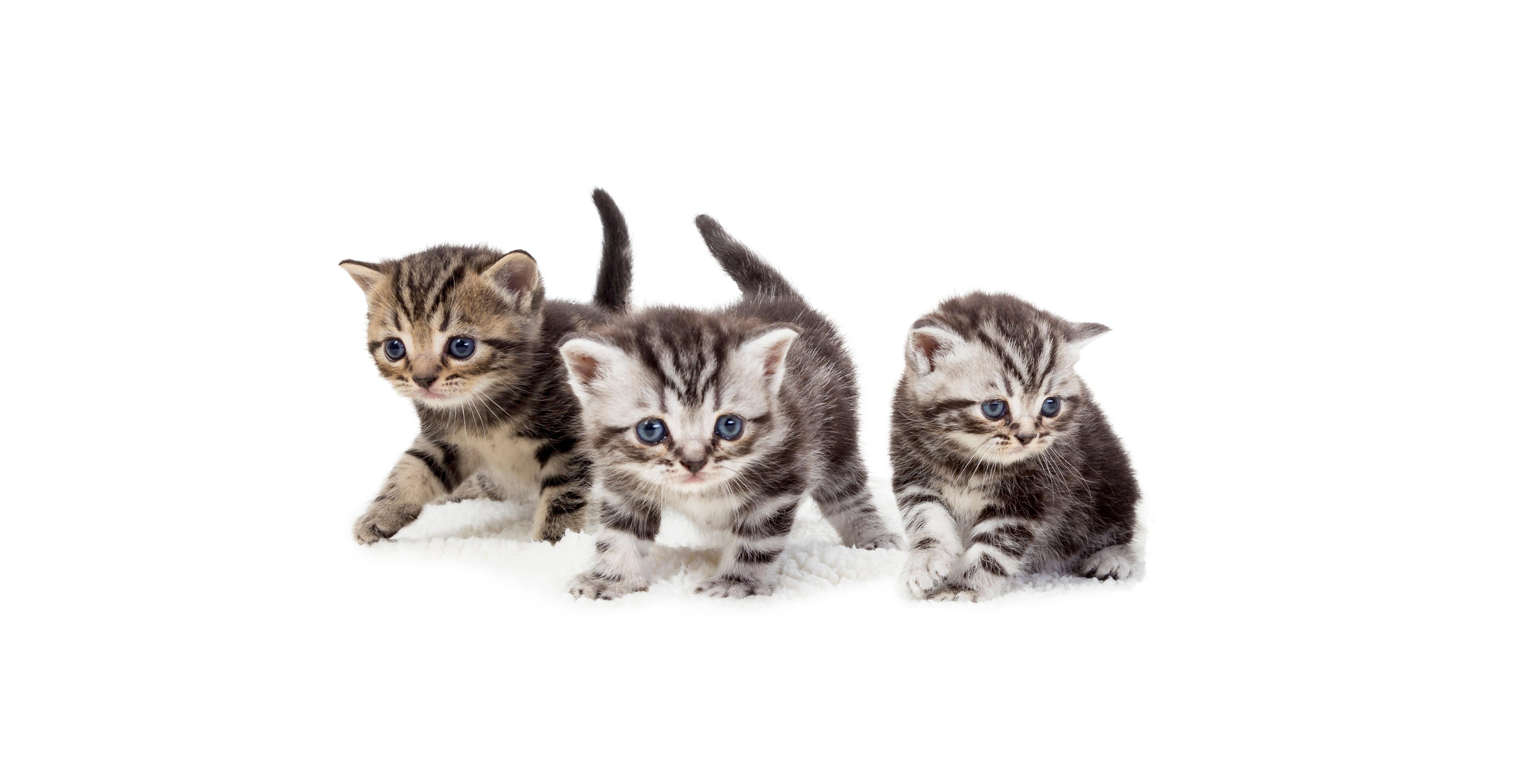 Beaphar Lactol_ kittens