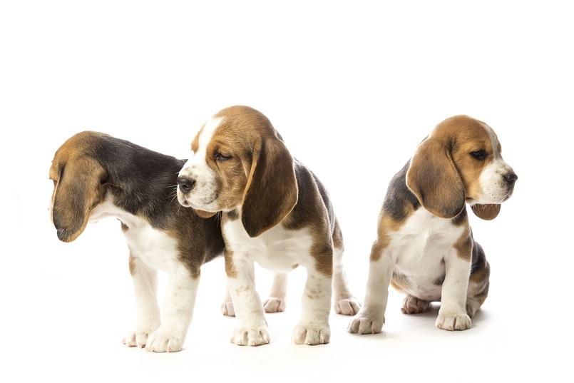 Pups naar nieuwe eigenaar